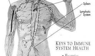 Иммунная система все же способна сопротивляться ВИЧ