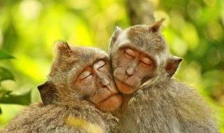 Вирусы, подобные ВИЧ, инфицируют обезьян уже миллионы лет