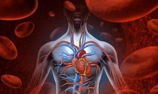 Пособие: ВИЧ и здоровье сердца
