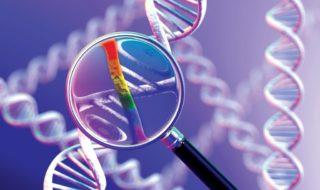 Забудьте о «гене гея» — У науки есть новое объяснение гомосексуальности