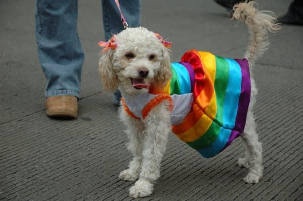 В предвыборном ролике российских геев сравнили с собаками (ВИДЕО)