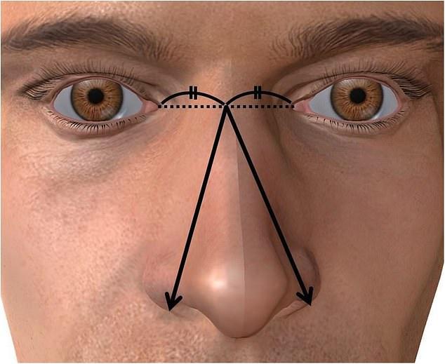 Размер пениса связан с размерами носа